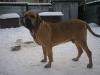 bulda-baron-30-12-2010-016