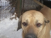 bulda-baron-30-12-2010-019