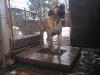 dc-tyson-31-12-2011-005