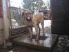 dc-tyson-31-12-2011-006