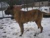 dc-tyson-31-12-2011-009