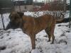 dc-tyson-31-12-2011-014