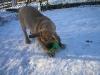 cecilka-22-1-2011-010