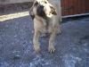 cecilka-8-3-2011-002