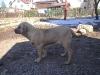 cecilka-8-3-2011-008