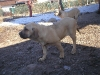 cecilka-8-3-2011-013