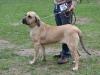 cecilka-kv-kolin-14-4-2012