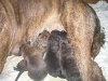 dc-mimina-17-3-2012-001
