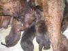 dc-mimina-17-3-2012-005