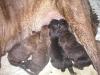 dc-mimina-17-3-2012-010