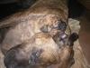 dc-stenata-6-4-2012-004