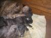 dc-stenata-6-4-2012-005