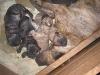 dc-stenata-6-4-2012-008