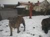 dc-evzen-31-12-2011-1