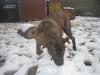 dc-evzen-31-12-2011-12
