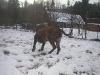 dc-evzen-31-12-2011-14