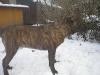 dc-evzen-31-12-2011-18