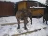 dc-evzen-31-12-2011-4