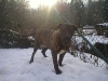 dc-evzen-31-12-2011-7