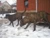 dc-evzen-a-teqi-31-12-2011-2