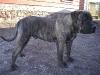 dc-gustik-15-11-2012-002