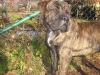 dc-gustik-15-11-2012-013
