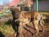 dc-gustik-15-11-2012-014