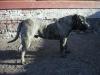dc-gustik-15-11-2012-015
