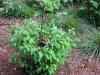 kalna-2009-5-6-7-cerven-049