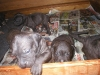 armani-19-3-2011-3-tydny-012
