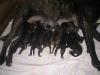 dc-6-1-2012-mimina-009