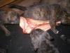 dc-mimina-5-3-2012-013