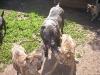 dc-mimina-beata-20-5-2012-007