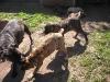 dc-mimina-beata-20-5-2012-008
