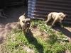 dc-mimina-beata-20-5-2012-010