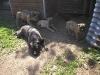 dc-mimina-beata-20-5-2012-013