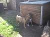 dc-mimina-beata-20-5-2012-014