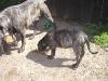 dc-mimina-beata-20-5-2012-027