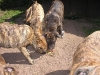 dc-mimina-beata-20-5-2012-030
