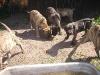 dc-mimina-beata-20-5-2012-031