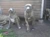 dc-mimina-beata-20-5-2012-036